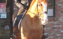 greenhawk-harness-equestrian-supplies-vancouver-out-and-about-10