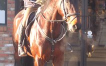greenhawk-harness-equestrian-supplies-vancouver-out-and-about-11