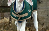 greenhawk-harness-equestrian-supplies-vancouver-out-and-about-2