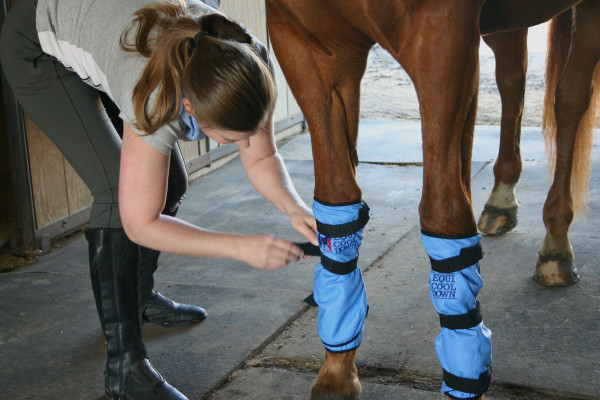 No Ice? No Problem! Check Out Equi Cool Down Wraps